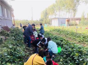濟源市實驗幼兒園: 累累豐收季  我來挖紅薯